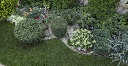 Green juniper bush trimmed in cylinder shape, use in landscapingclose up Stok Fotoğraf