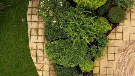 Flowerbed with juniper on flowerbed, trimmed in abstract shapes, top view