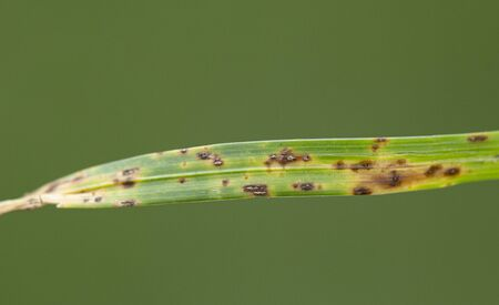 Fusariosis patient running lawn on green background, closeup