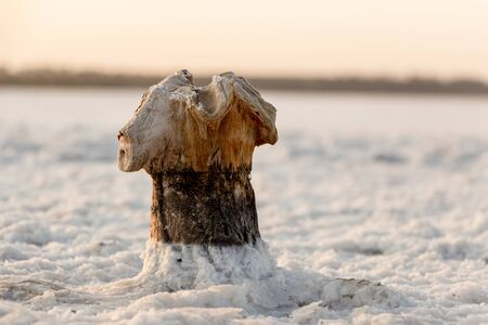 Wooden peg on a salt lake. The wood is destroyed by aggressive conditions Background 版權商用圖片