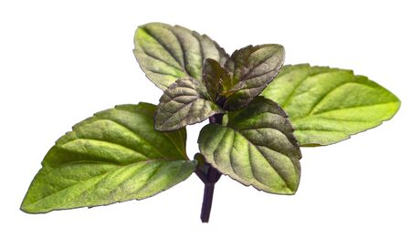 Closeup of mint leaves cut out on white background