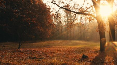 Sunlight illuminates the lawn in the autumn forest. Over the meadow stands the morning mist.
