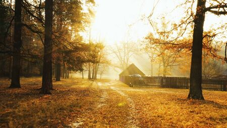 Old abandoned wooden barn on lawn in autumn forest. The suns rays cut through the morning mist