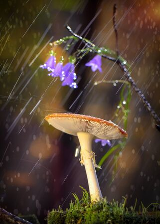 Amanita in the forest during the rain, with flowers in the background. Standard-Bild - 138145734