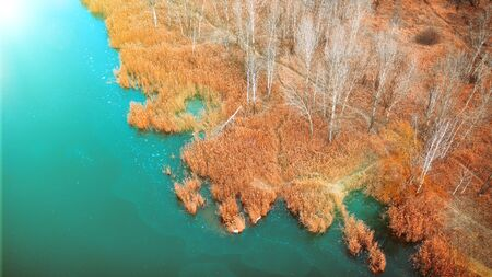 Yellow dry reed, on the shore of a frozen lake, autumn landscape, drone view.