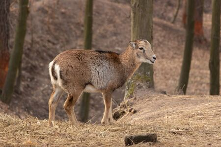 Young female deer in the forest, selective focus, closeup. 免版税图像
