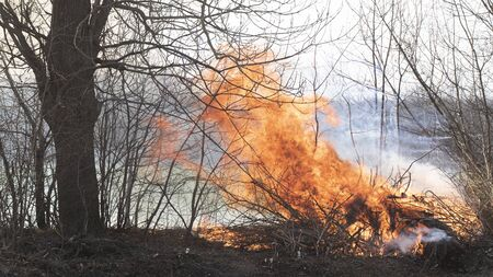 Fire in the spring oak forest. It is caused by negligence of people