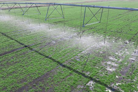 Large automated system of irrigation on the agricultural field. Drone view.