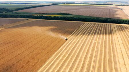 Harvester, a special machine for harvesting. Agricultural machinery works on the field. Drone view