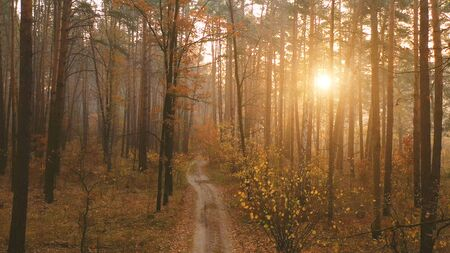 Evening foliage, a small fog creates depth and a mystical atmosphere. Colorful landscape in warm colors, with red, green and yellow leaves on the trees. And the dirt road, or the path. Banque d'images - 144155877