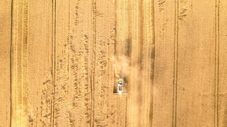 Harvester on the field, harvesting wheat.
