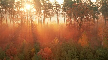 Evening in the autumn forest. The rays of the sun make their way through the branches of the trees, creating a magical, warm, mystical atmosphere. Autumn nature, landscape.