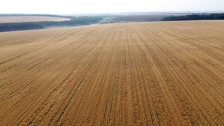 Aerial view of a drone on a field with ripe wheat ready for harvest.