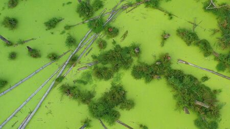 Aerial view of the swamp in the forest. Green algae cover the entire surface of the water.