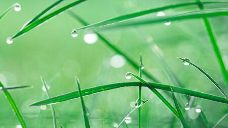 Dew drops on fresh green grass, close-up. Banque d'images