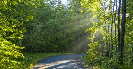 Dawn in the deciduous forest. The suns rays break through the morning mist.