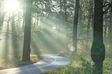 Wonderful morning mystical landscape. The sun's rays in the summer morning forest break through the fog, illuminating the paved path. An ideal place for a cancer run and outdoor fitness.