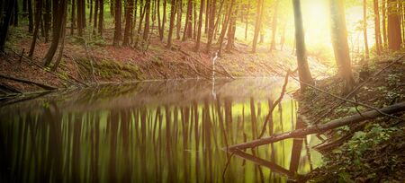 River in a mystical forest. Rough old trees grow on both sides of the pond.