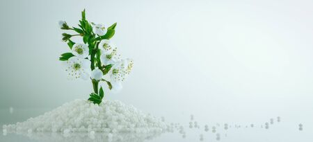 Flower growing from mineral fertilizers. Concept background. Stockfoto