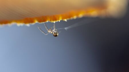 A scarce garden spider sits on a web, a big plan on a green background.