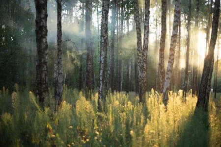Morning fog in the light summer forest.