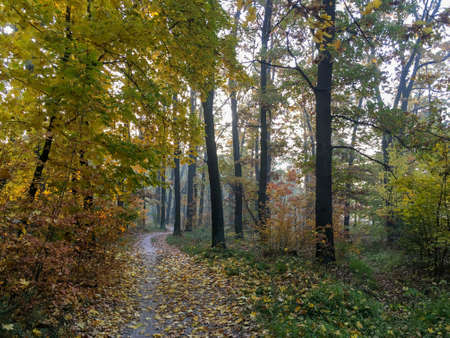 Dirt road in the autumn forest, yellow leaves in the trees and on the ground.
