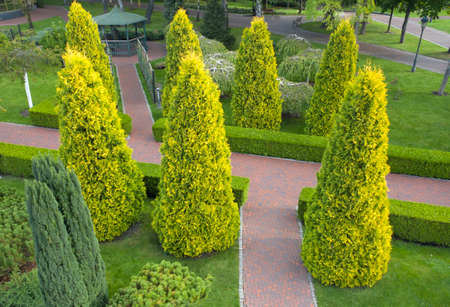 Thuja, boxwood and ornamental plants near the path in the park.