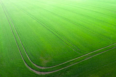 Field of young green wheat, and technological tracks. Wonders of the agrarian field. Drone view.