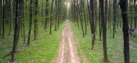 Dirt road in the spring green deciduous forest. View from the drone.