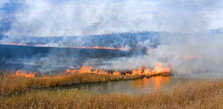 Burning dry grass near the forest. An ecological catastrophe, with harmful emissions in the atmosphere.