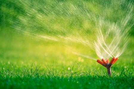 The rotary nozzle of the automatic watering system waters the juicy young green lawn grass. Фото со стока