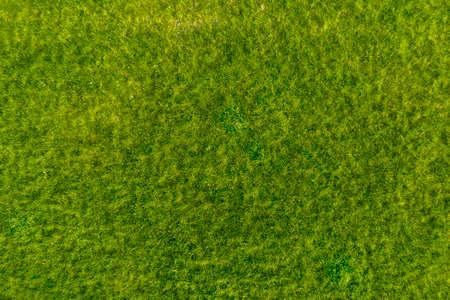 Green grass in the garden. Wonderful summer background.