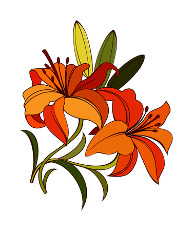 bright orange, scarlet lily flower with green leaves isolated on white background. decorative illustration with dark outline