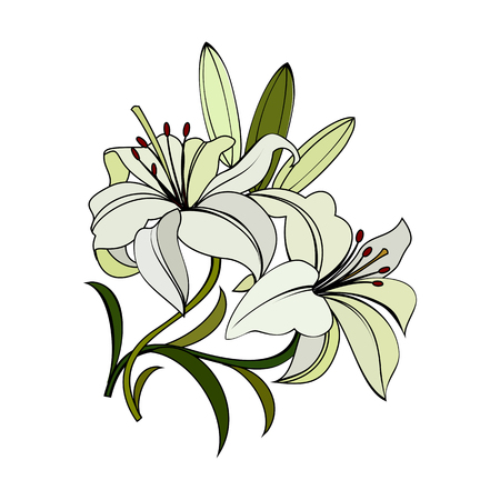 white lilies flowers with green leaves isolated on white background. decorative illustration with dark outline