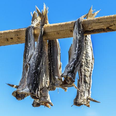 stockfish: Close up Dried codfish Svolvaer Lofoten Norway. Stock Photo