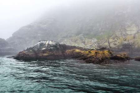 Majestic sea and  flocks of birds sitting on rocks in heavy fog in Northern Norway Stock Photo