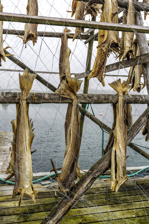 Rack full of dried codfish  in Northern Norway.