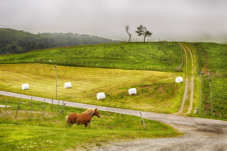 Horse Stands on a Green Mown grass field on a summer foggy day. Norway. Reklamní fotografie