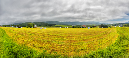 Hay rolled and packaged on a Green Mown grass field on a summer foggy day. Norway.