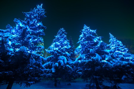Snow covered Christmas tree lights in a winter forest by night. Huge fir trees with Christmas lights, stand out brightly against the dark blue tones of the snow covered scene. Super wide angle shot.