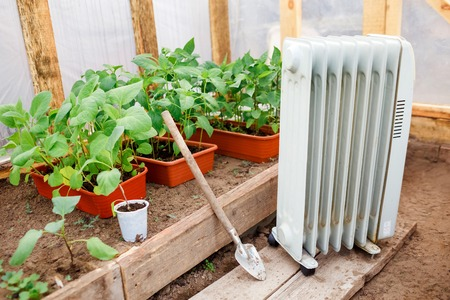 oil heater: Electric oil heater in the greenhouse with seedlings of plants, planting in early spring during the cold weather.