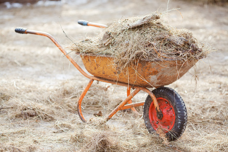 Wheelbarrow with hay and manure, cleaning paddocks Stock Photo