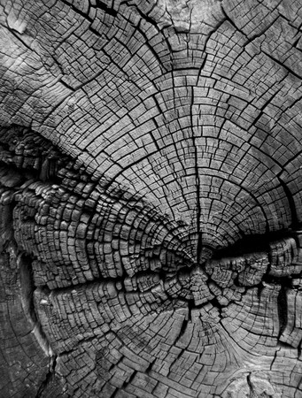 Cracked tree stump showing age rings in black and white