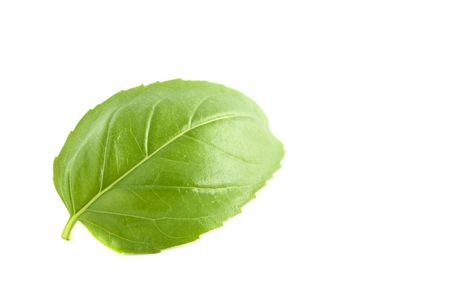 Basil Leaf - Ocimum basilicum