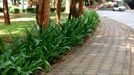 sidewalks: Walk in the park with trees and paved with cobblestone