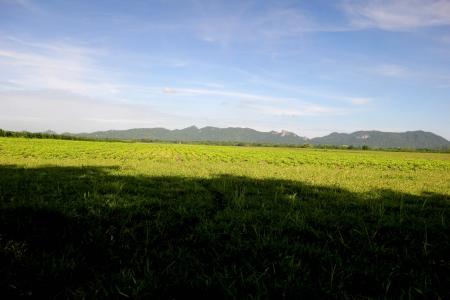 acres: Green acres with a mountain backdrop