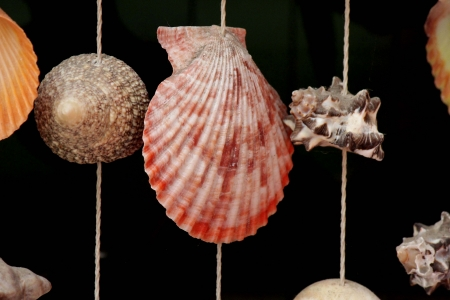 thin shell: Many types of mobile shells