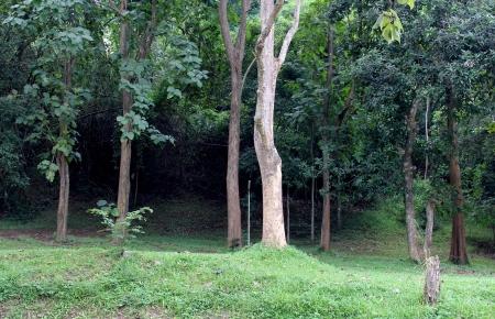 big trees photo