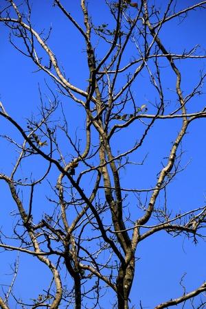 latitude: High latitude dead tree under blue sky Stock Photo