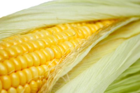 shucked: Sweet corn isolated on a white background